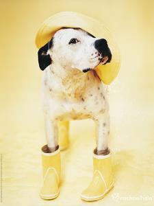 Zen Gumbootdog by Rachael Hale