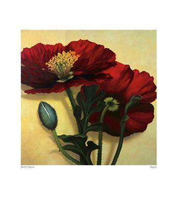 Poppies by Rachel Deacon