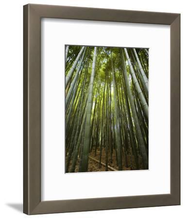 Bamboo Forest, Arashiyama District