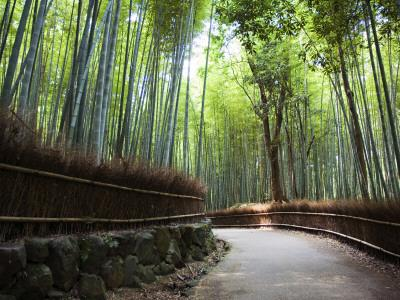 Bamboo Forest Walkway, Arashiyama District
