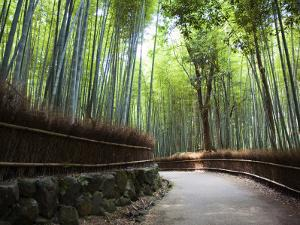 Bamboo Forest Walkway, Arashiyama District by Rachel Lewis