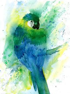 Blue Macaw by Rachel McNaughton