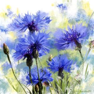 Cornflowers by Rachel McNaughton