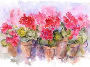 Geranium Pots by Rachel McNaughton