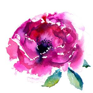 Pink Peony by Rachel McNaughton