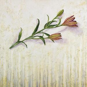 Lily Monet by Rachel Paxton