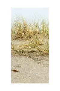 Dunes I by Rachel Perry
