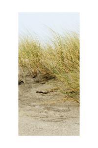 Dunes III by Rachel Perry