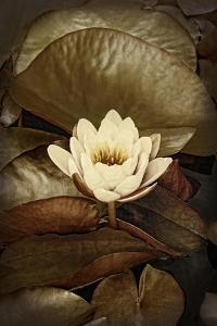 Lily Pad Duo II by Rachel Perry