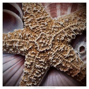 Macro Shells I by Rachel Perry