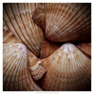 Macro Shells VI by Rachel Perry