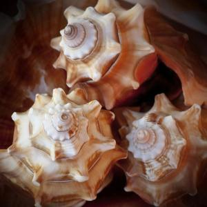 Macro Shells VII by Rachel Perry