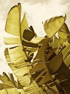 Palm Fronds II by Rachel Perry
