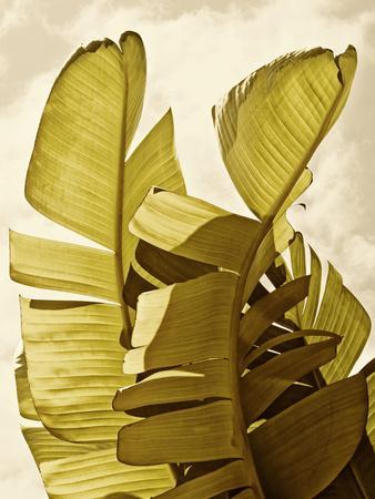 Palm Fronds III
