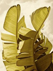 Palm Fronds III by Rachel Perry