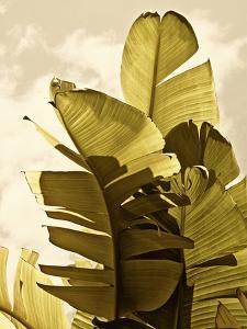 Palm Fronds IV by Rachel Perry
