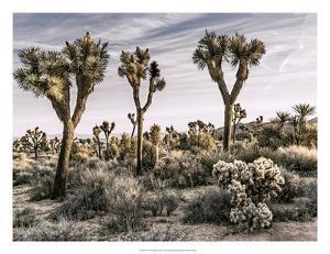 Views of Joshua Tree IX by Rachel Perry