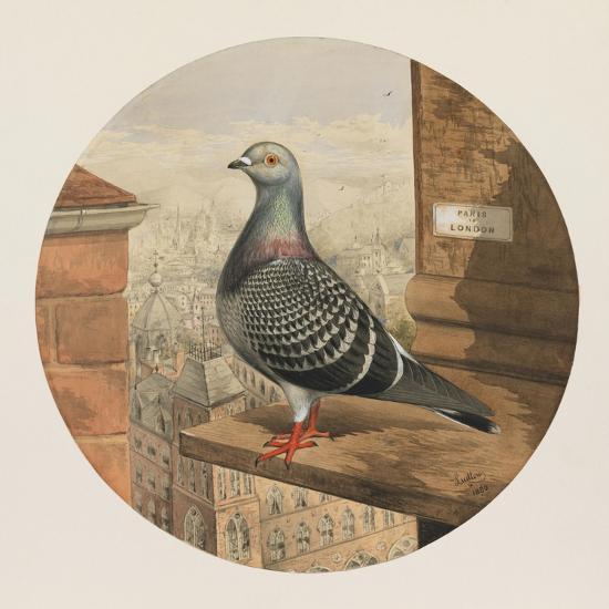 Racing Pigeons, Paris to London, 1880-Henry Stephen Ludlow-Giclee Print
