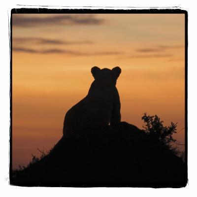 Radiant Africa 3-Susann Parker-Photographic Print