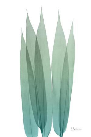 https://imgc.artprintimages.com/img/print/radiant-bamboo-leaf-1_u-l-pyjt720.jpg?p=0