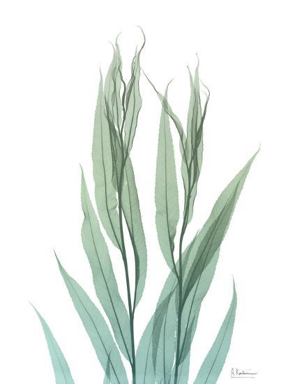 Radiant Bamboo Leaf 2-Albert Koetsier-Art Print