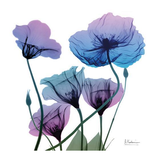 Radiant Bloom 1-Albert Koetsier-Art Print
