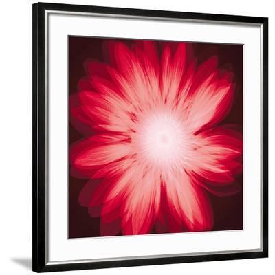 Radiant Gerbera-Hugh Turvey-Framed Art Print
