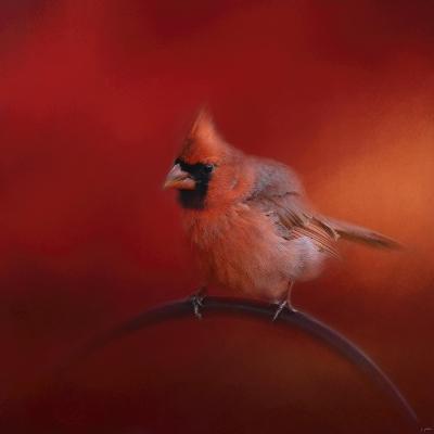 Radiant Redbird-Jai Johnson-Giclee Print