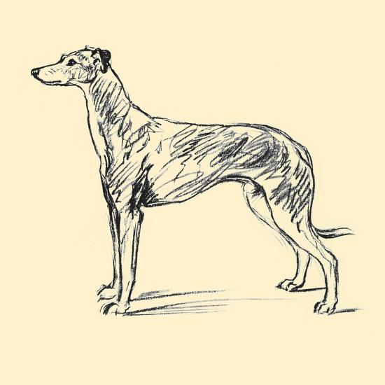 Radicome The Greyhound-Lucy Dawson-Art Print