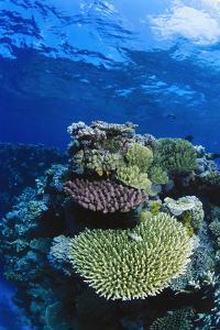 Great Barrier Reef, Australia by Radius Images
