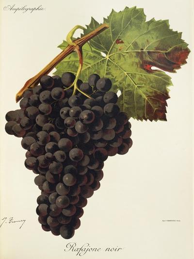 Rafajone Noir Grape-J. Troncy-Giclee Print