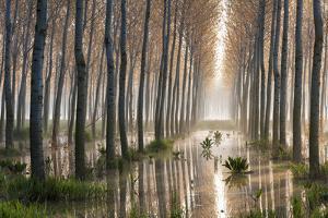 Rains of Spring by Raffaele Spettoli