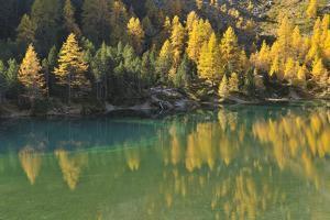 Alpine Lake in Autumn, Lake Palquognasee, Lai Da Palquogna, Albula-Pass, Grisons, Switzerland by Raimund Linke