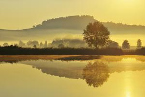 Landscape with Tree and Morning Mist by Raimund Linke