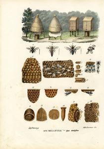 Bees, 1863-79 by Raimundo Petraroja