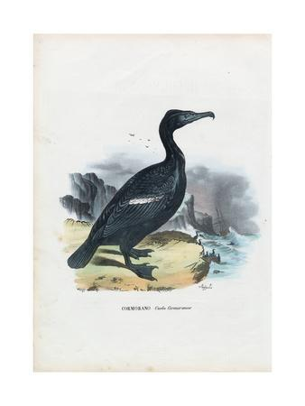 Cormorant, 1863-79