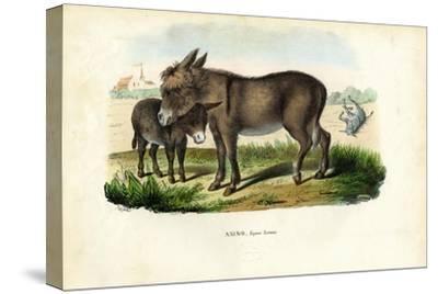 Donkey, 1863-79