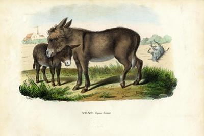 Donkey, 1863-79 by Raimundo Petraroja
