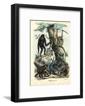 Gibbons, 1863-79