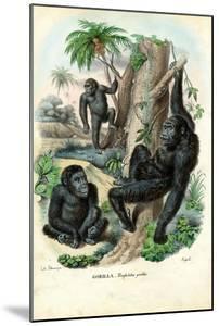 Gorilla, 1863-79 by Raimundo Petraroja