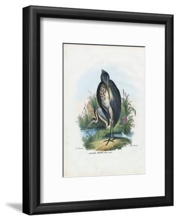 Grey Heron, 1863-79