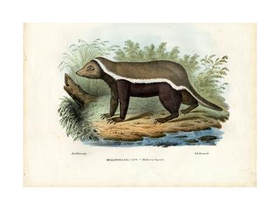 Honey Badger, 1863-79