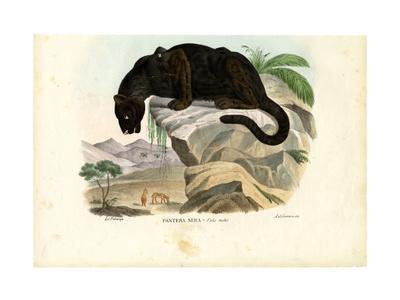 Javan Leopard, 1863-79
