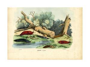 Limax Snail, 1863-79 by Raimundo Petraroja