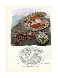 Mussels, 1863-79 by Raimundo Petraroja