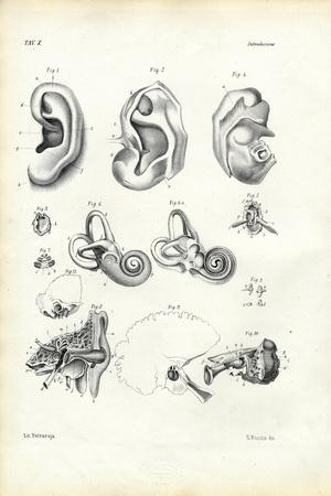 Organ of Hearing, 1863-79