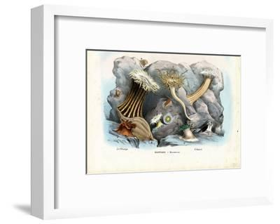Sea Anemones, 1863-79