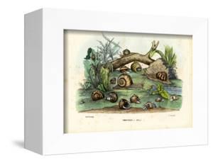 Snails, 1863-79 by Raimundo Petraroja