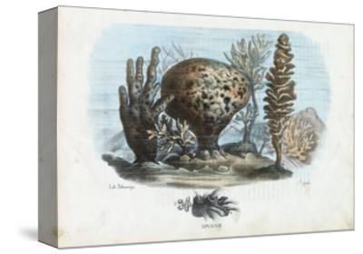 Sponges, 1863-79