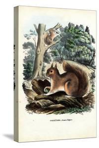 Squirrel, 1863-79 by Raimundo Petraroja